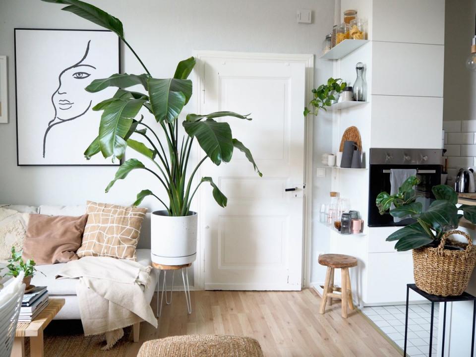 Wohnbereich Auf Kleinstem Raum In 2020  Wohnzimmer Pflanzen von Pflanzen Wohnzimmer Ideen Bild