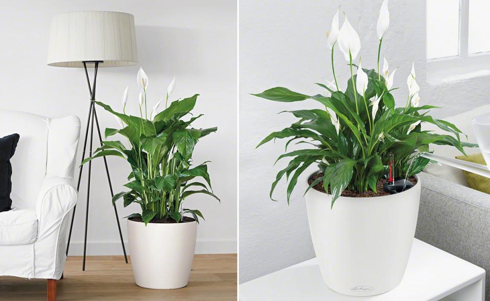 Wohnzimmerambiente Durch Pflanzen Aufwerten von Moderne Pflanzen Wohnzimmer Bild