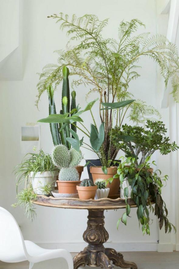 Wohnzimmerideenmitpflanzenfüreinglücklicherwinter5 von Pflanzen Ideen Wohnzimmer Photo