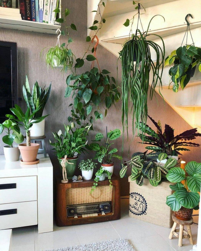 Zehn Neue Gedanken Über Dschungel Deko Wohnzimmer Die Ihre von Dschungel Deko Wohnzimmer Photo